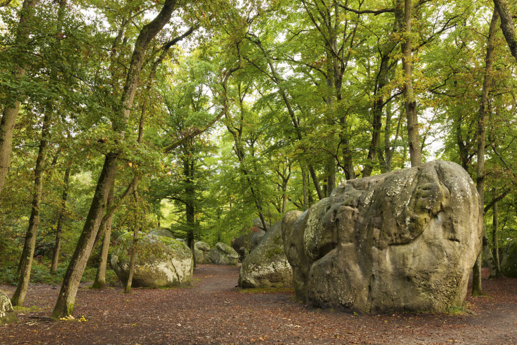 Fontainebleau Forest near Barbizon, France.