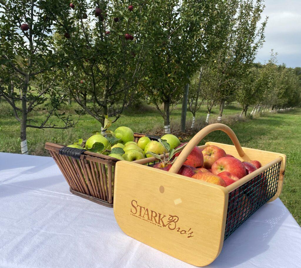 Fruit from Stark Bros Nurseries in Louisiana, Missouri.