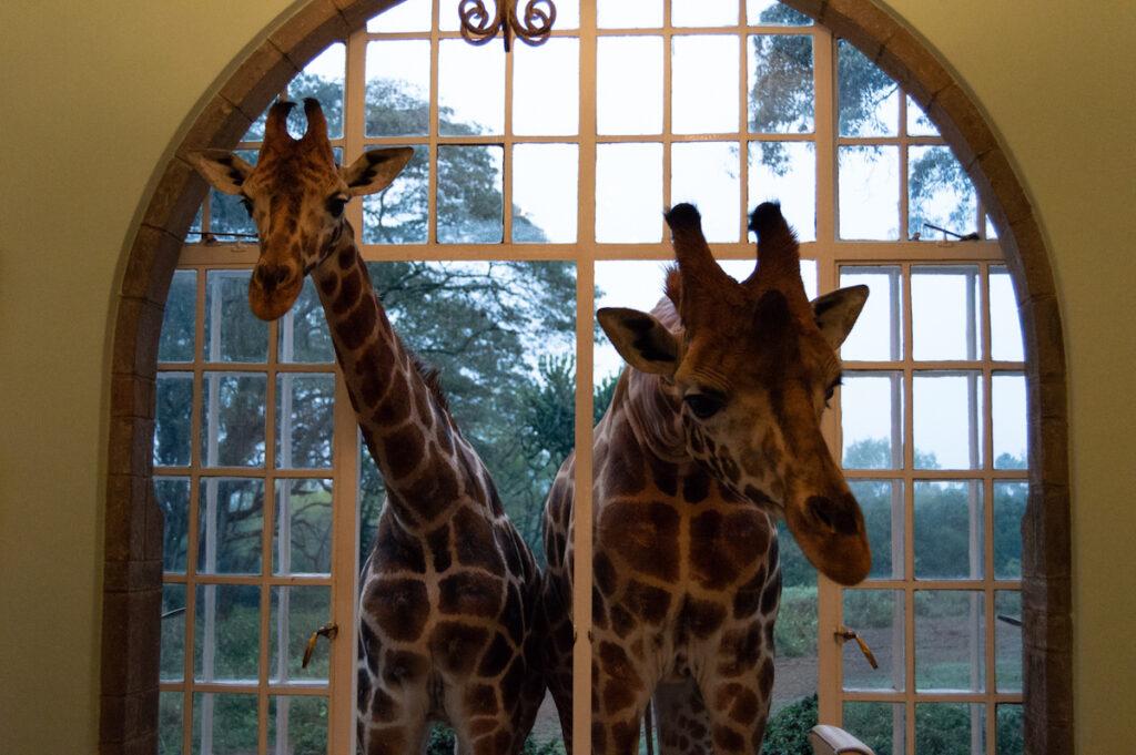 Giraffe Manor in Nairobi.