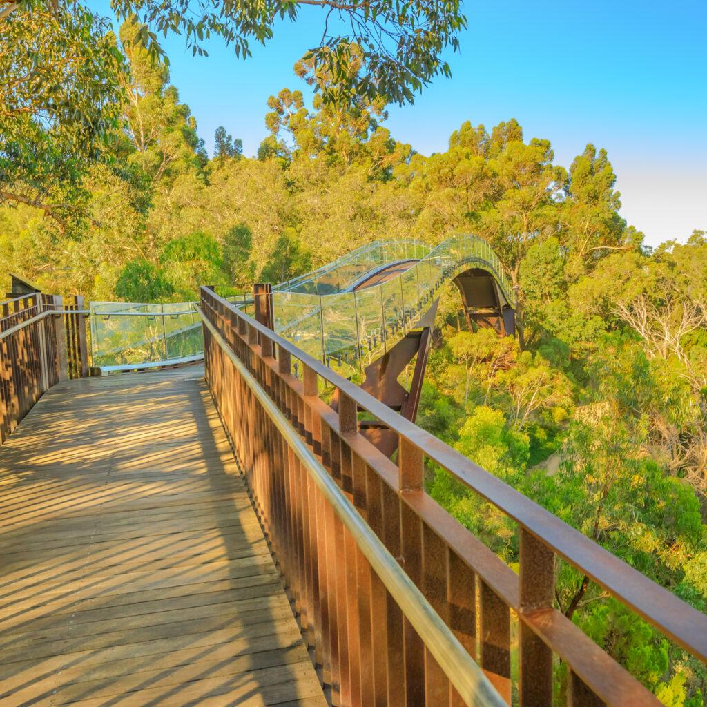 Glass bridge in Kings Park and Botanic Garden.