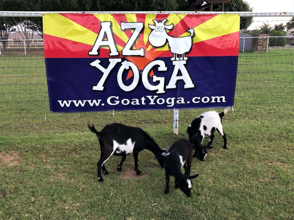 Goat yoga in Arizona.