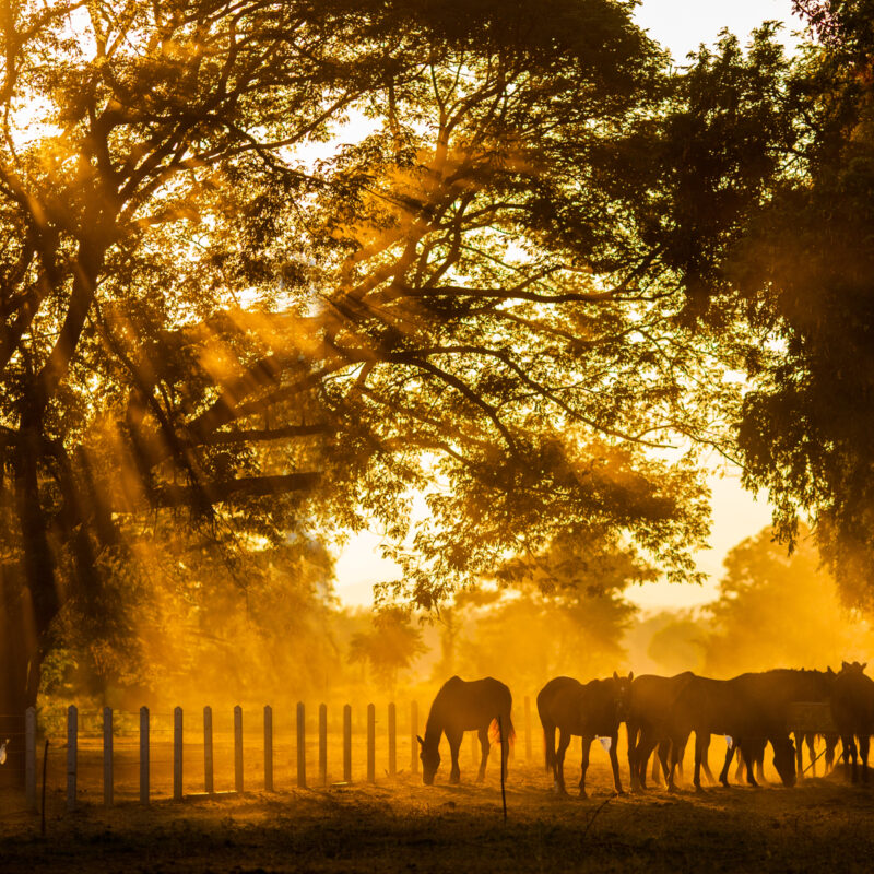 Golden Light shines into the stables.