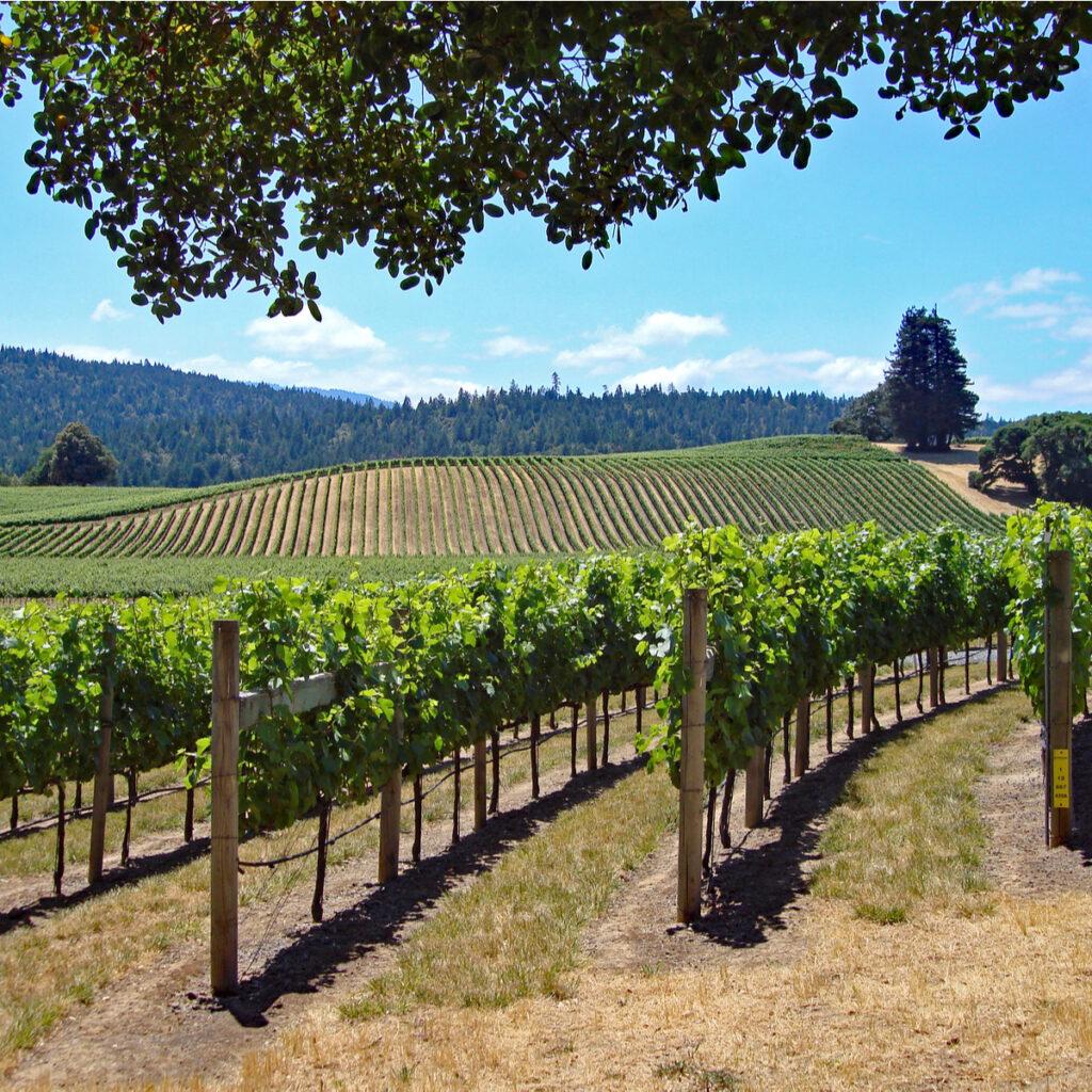 Goldeneye Winery.