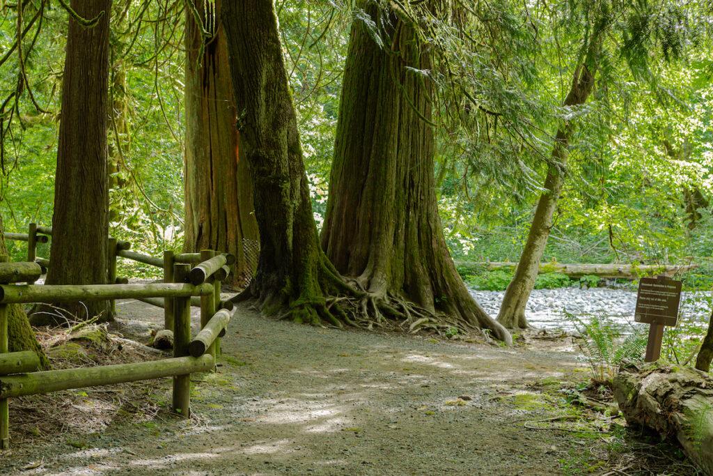 Goldstream Provincial Park on Vancouver Island.