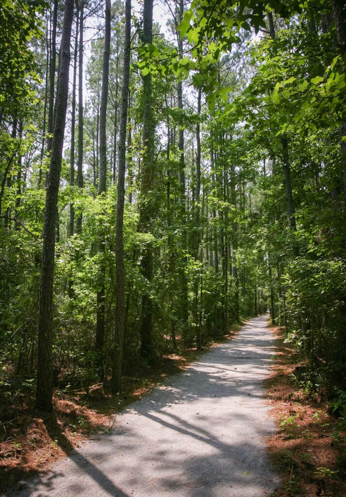 Goose Creek State Park in Washington, North Carolina.