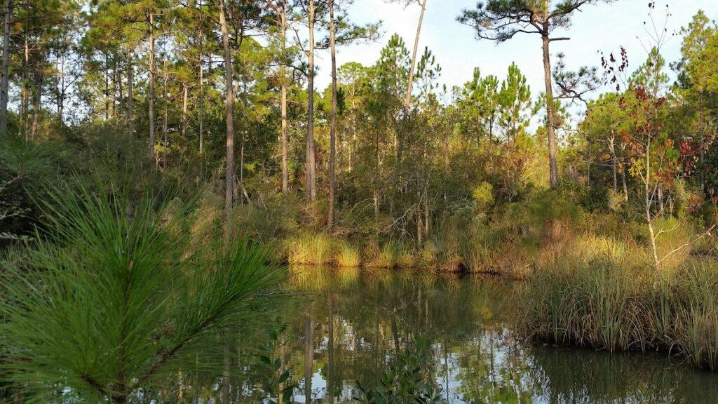Graham Creek Nature Preserve in Foley, Alabama.