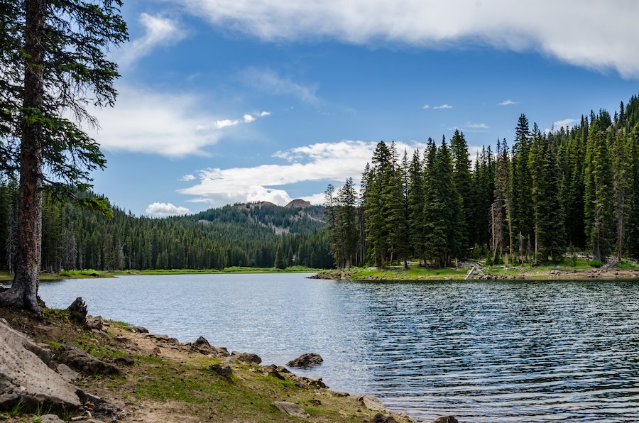 Grand Mesa National Forest in Colorado.