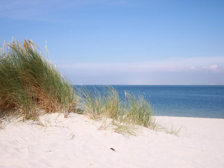 Grass, beach dunes, and ocean