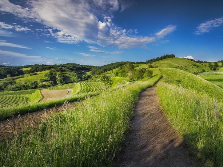 Green hills Ecuador