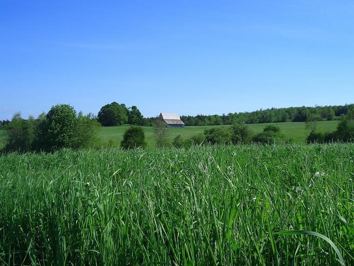 Green hills of Nova Scotia farm.