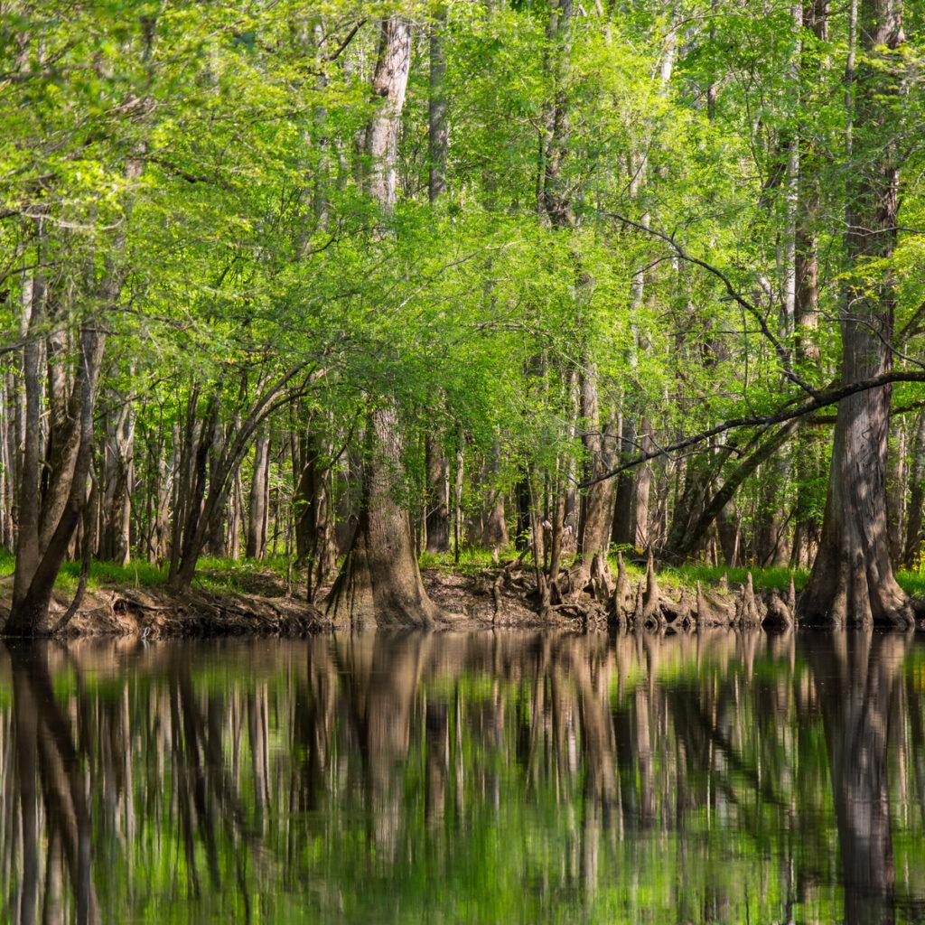 Hardwood Forest, Congaree National Park, South Carolina