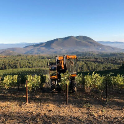Harvesting grapes at the Obsidian Wine Co.