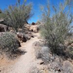 Hiking in Usery Mountain Regional Park.