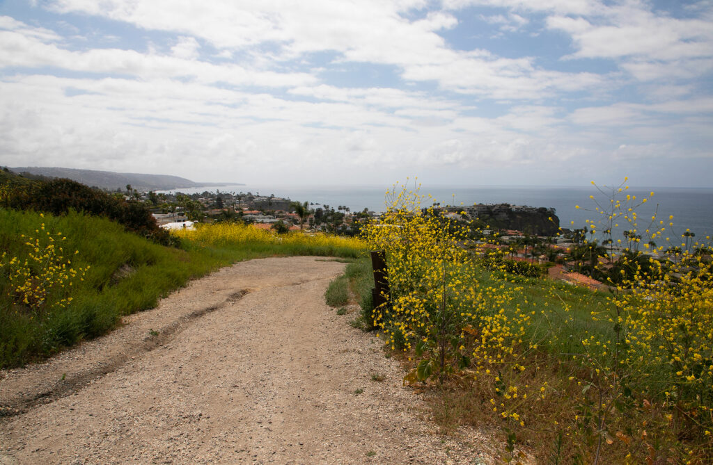 Hiking through Crystal Cove State Park.