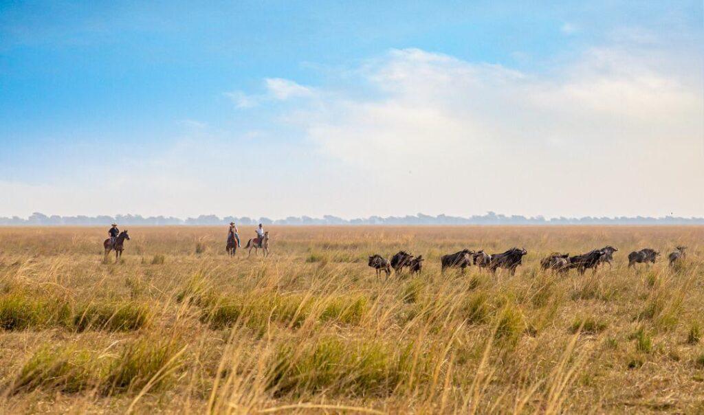 Horse riding safari via Simalaha Horse Safari.
