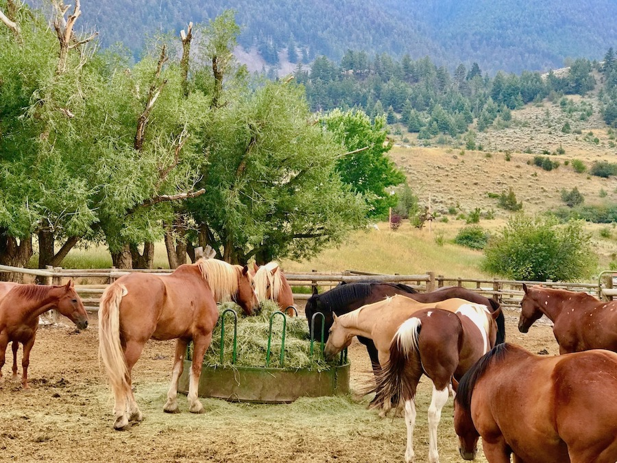 Horses at Chico Hot Springs.
