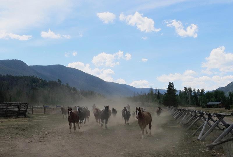 Horses heading into the corral at Rawah Ranch.