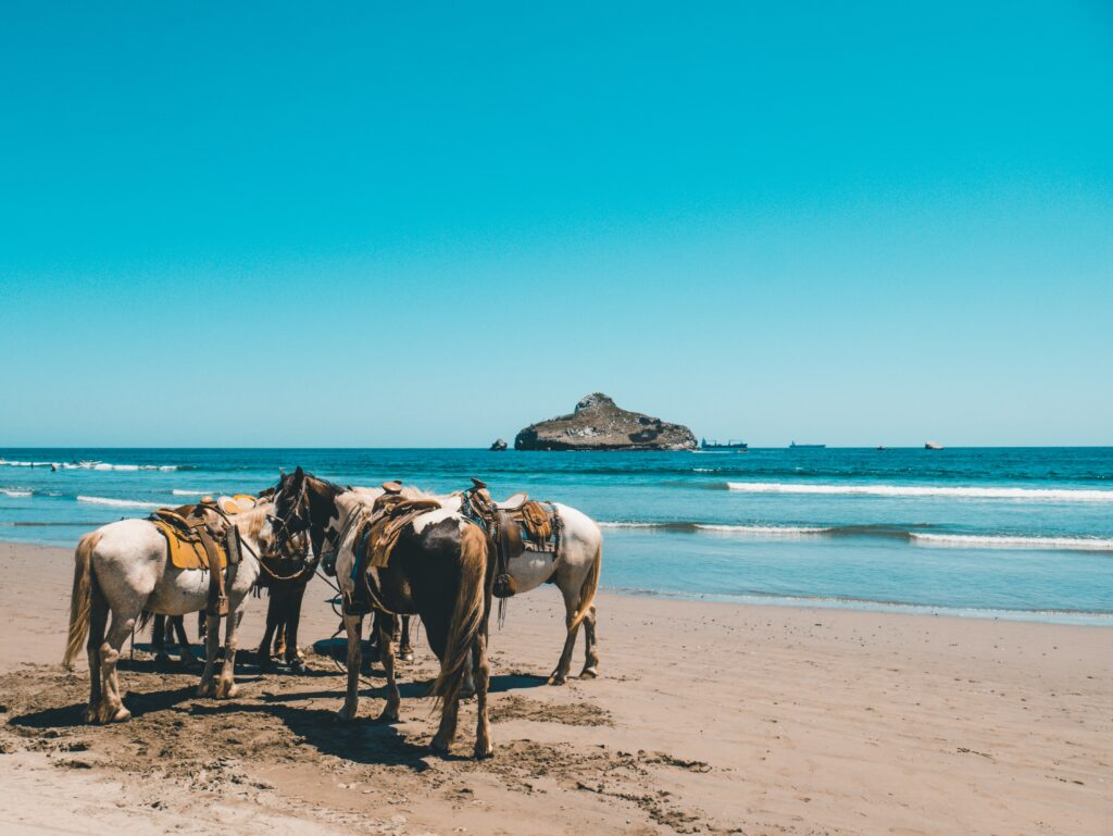 Horses huddled together in the sand on the beach, Mazatlán, Mexico
