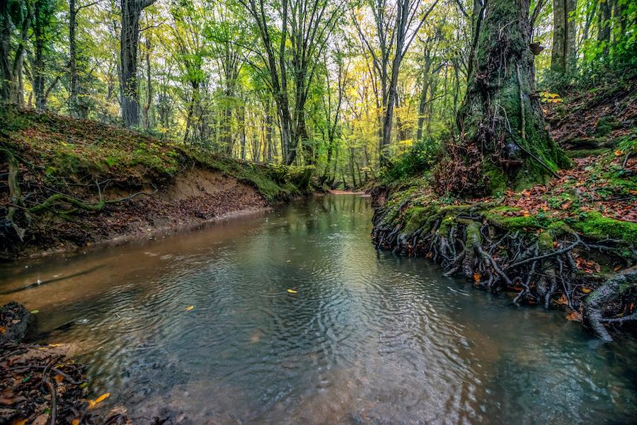 Igneada Longoz Forests National Park in Demirkoy, Turkey