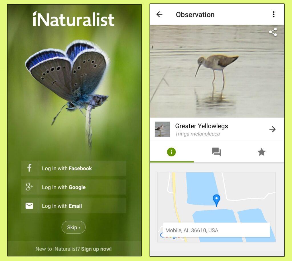iNaturalist app.