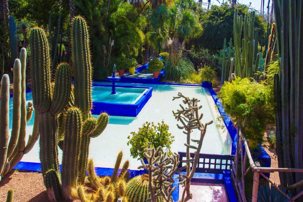 Inside Morocco's Majorelle Garden.