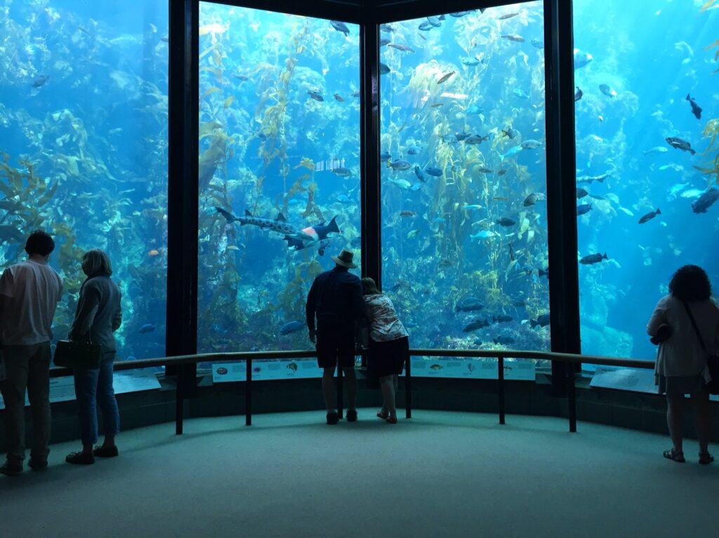 Inside the Monterey Bay Aquarium.