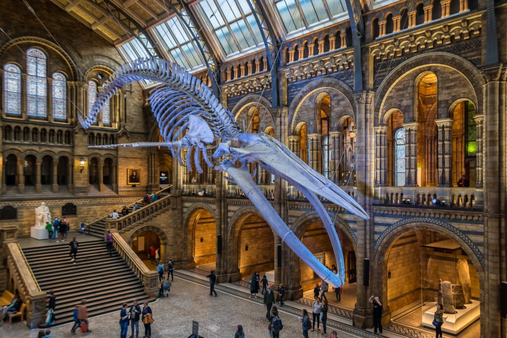 Inside the Natural History Museum in London.