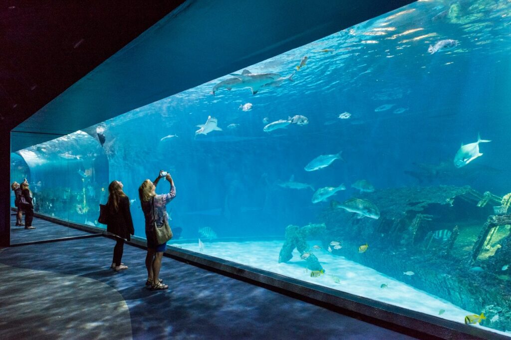 Inside the North Carolina Aquarium.