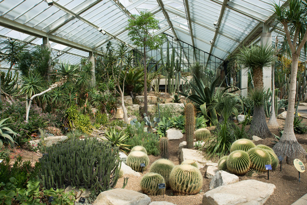 Inside the Princess Of Wales Conservatory at Kew Gardens.