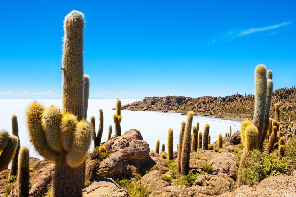 Isla Incahuasi at the Uyuni Salt Flats in Bolivia.