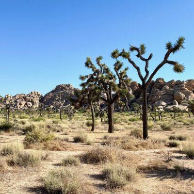 Joshua Tree National Park in California.