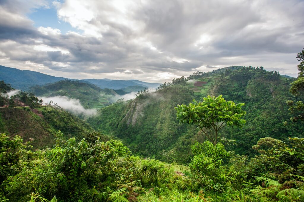 Jungle views in Uganda.