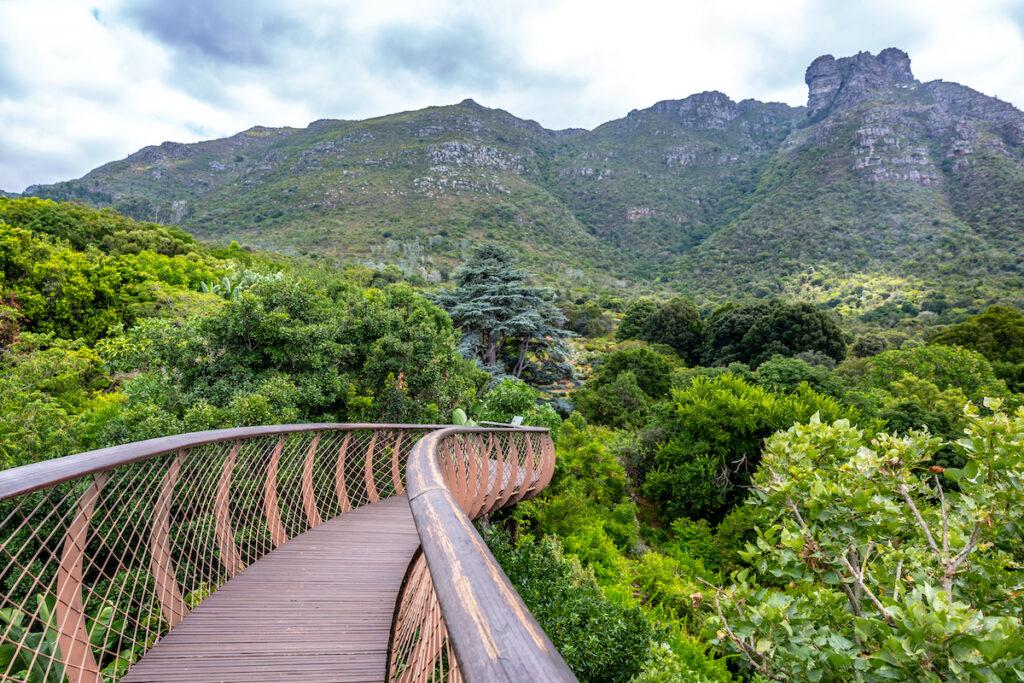 Kirstenbosch Botanical Gardens in Cape Town.