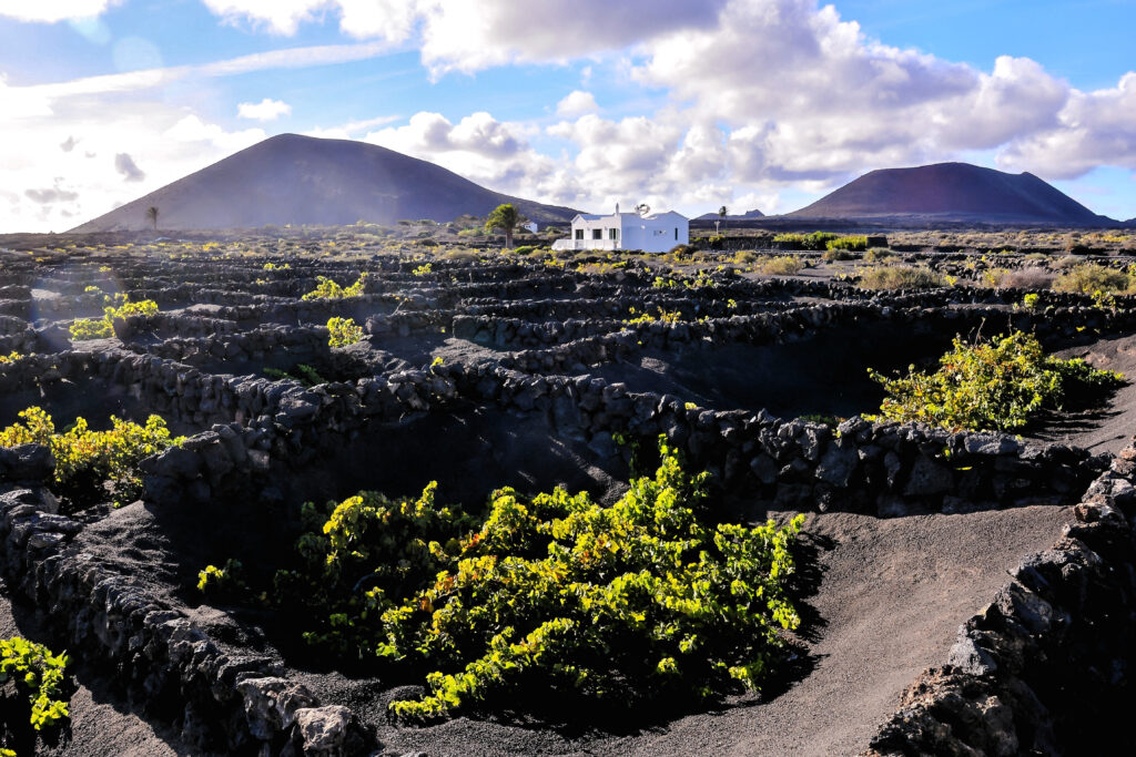 Lanzarote, Canary Islands vineyards with whitewashed building and mountains in the background