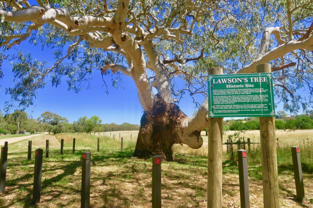 Lawson's Tree, a historic site in Inverleigh, Australia.