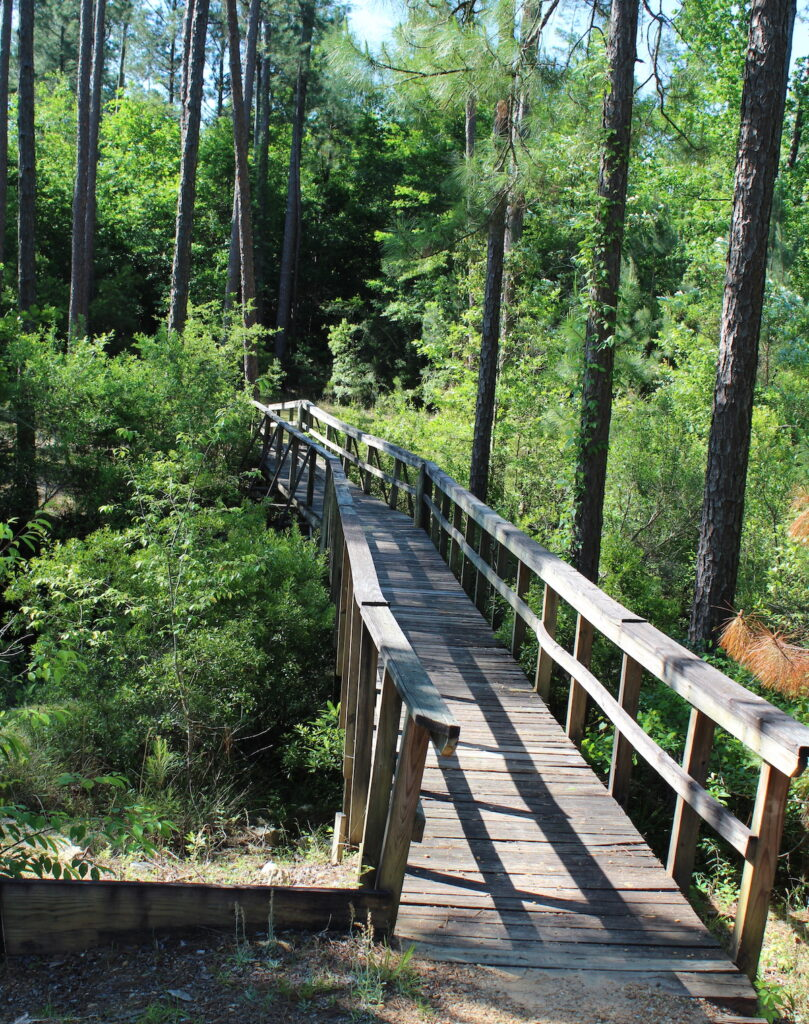 Little River State Forest in Alabama.