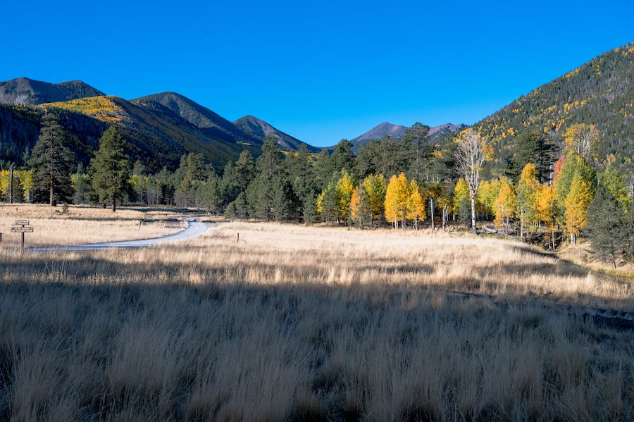 Lockett Meadow near Flagstaff, Arizona.