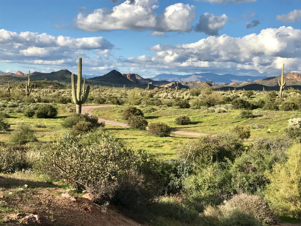 Lost Dutchman State Park in Apache Junction.