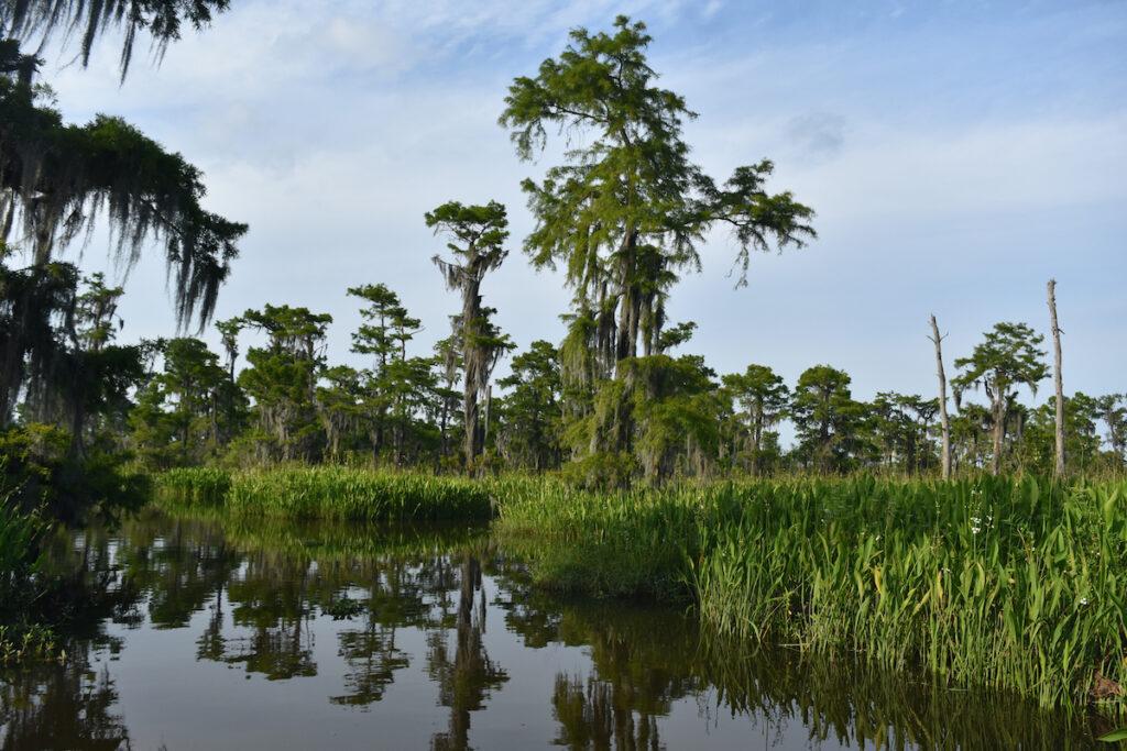 Louisiana's Barataria Preserve during the spring.