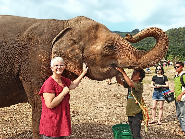 Mae Taeng Thailand Elephant