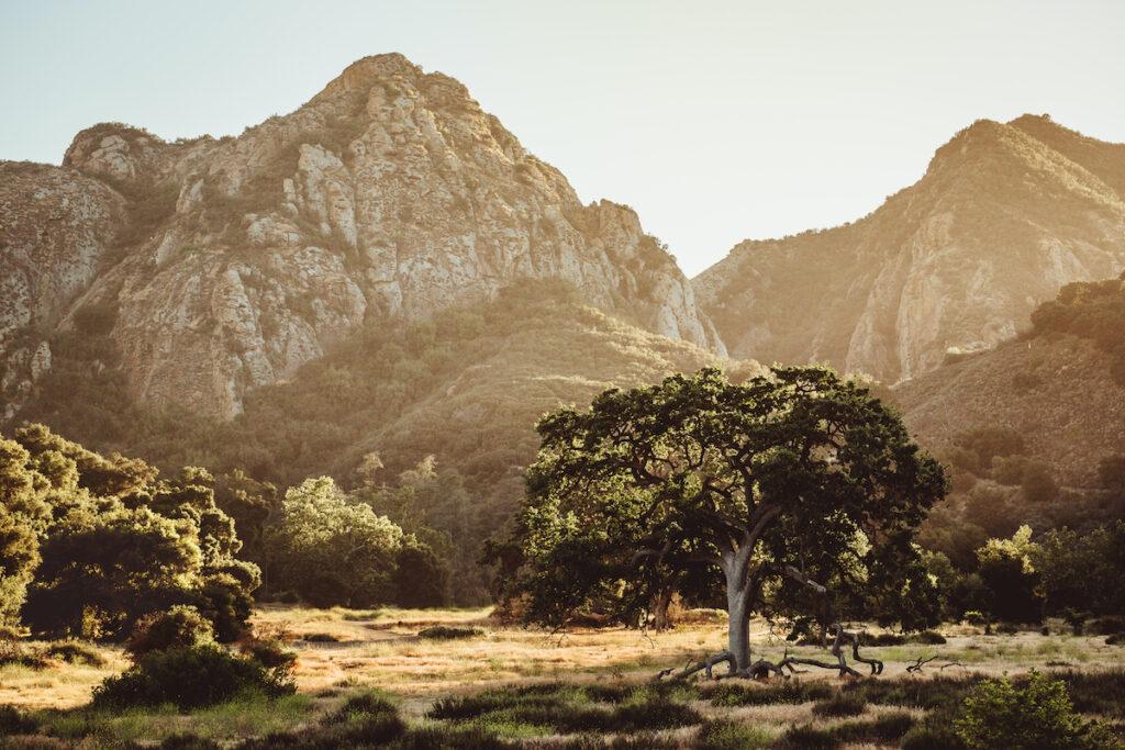 Malibu Creek State Park in California.