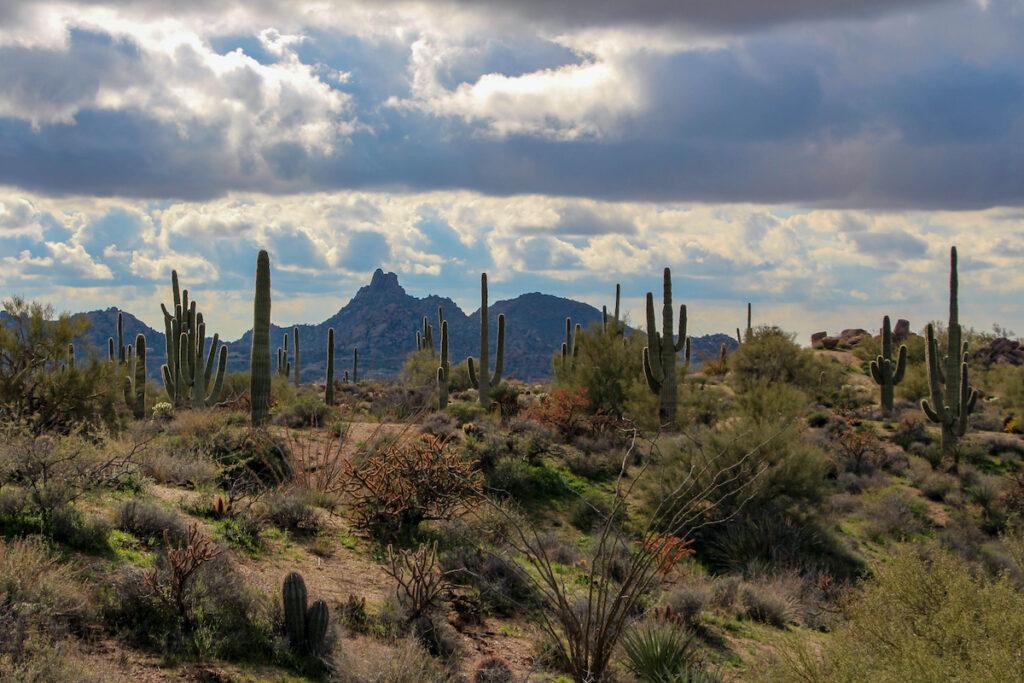 McDowell Sonoran Preserve in Scottsdale.
