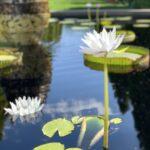 Monet Garden, Denver Botanic Gardens.