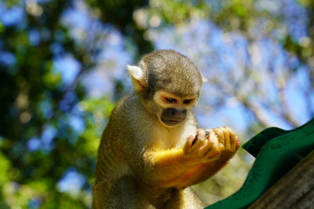 Monkey Jungle in Miami, Flirida.