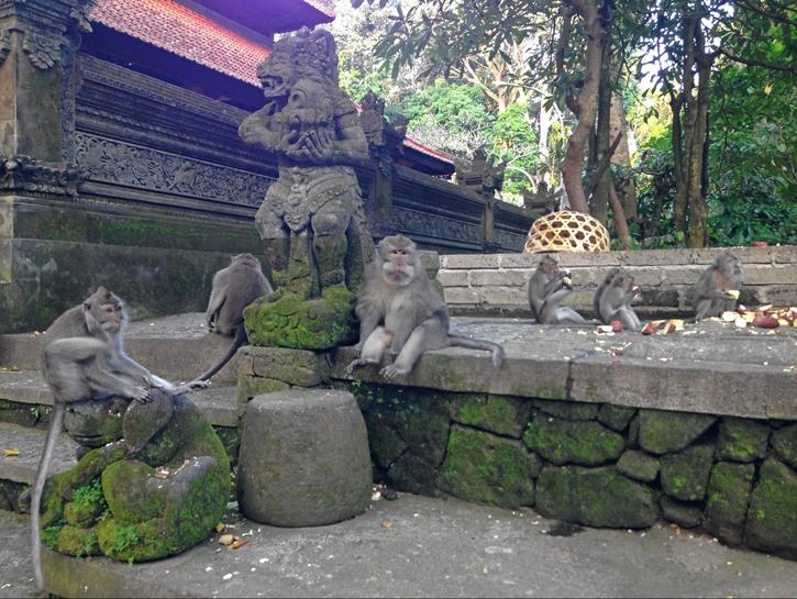 Monkeys eating break on stone ruins, Ubud Monkey Forest, Bali