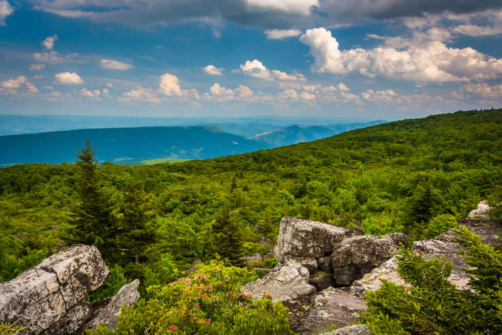 Monongahela National Forest in West Virginia.