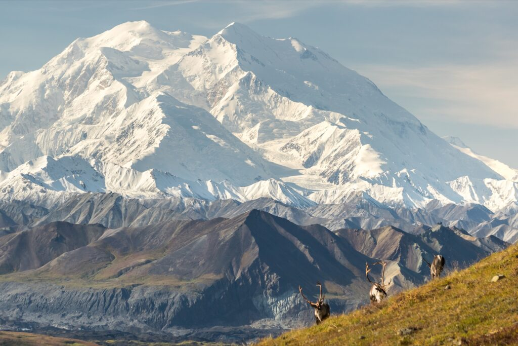 Mount Denali and some caribou.