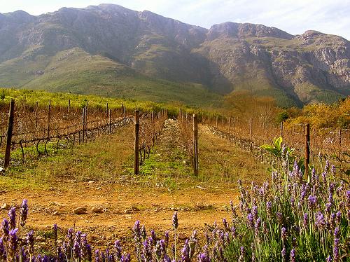 Mountainside winery