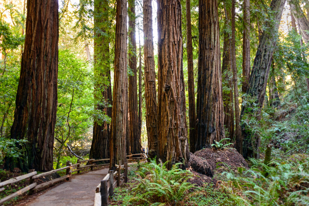 Muir Woods National Monument in California.