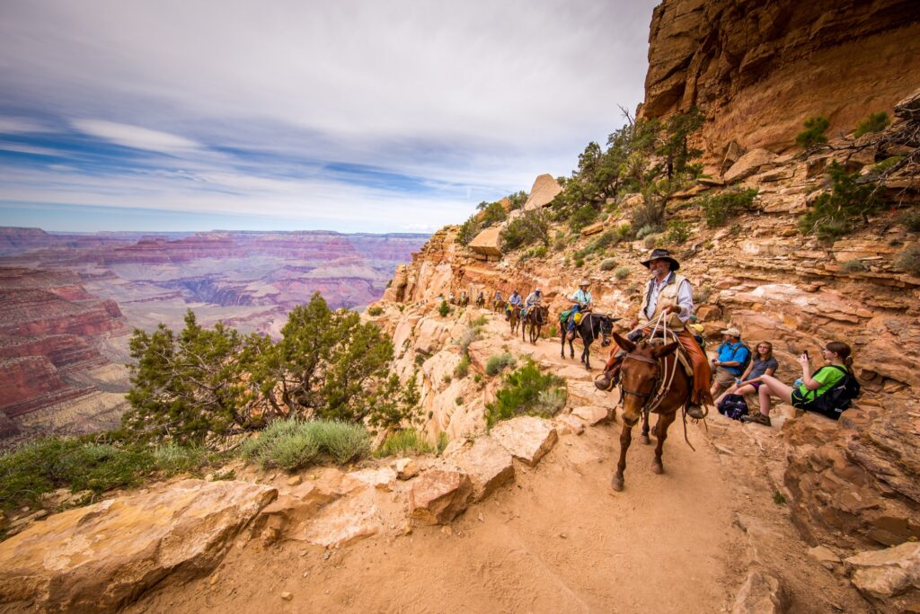 Mule rides at the Grand Canyon.